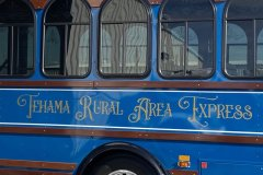 trax-bus-lettering-side